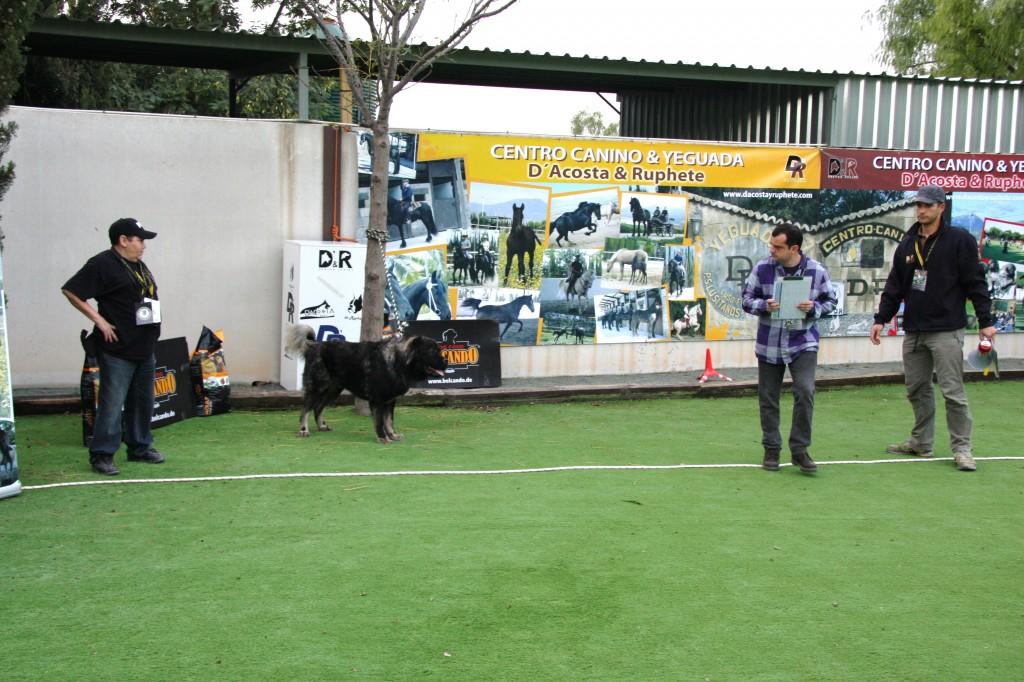 Campeonato Nacional 2012 CEPPC